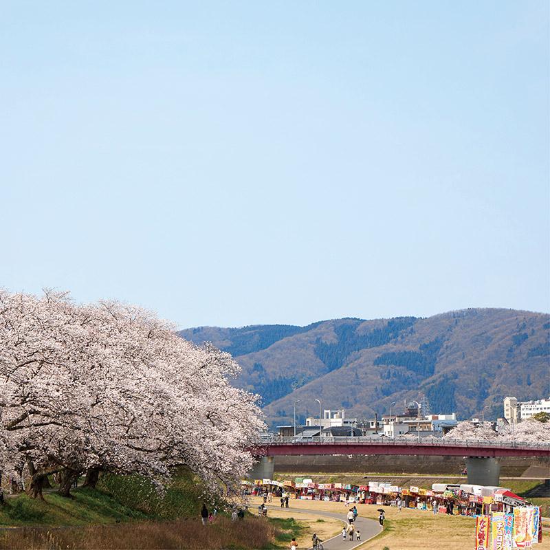 足羽河原の桜イメージ